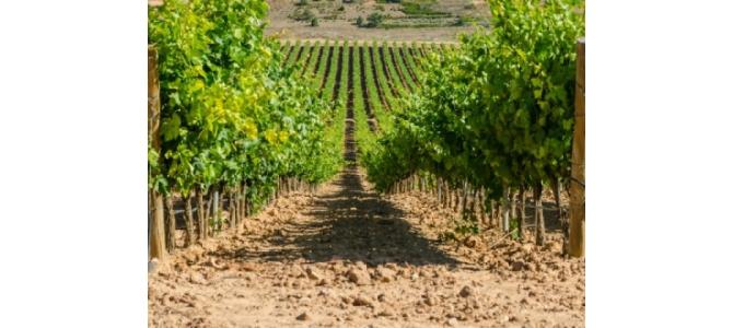 Vand teren agricol Romania- Mures 480 ha Vita de vie 1120 Ha