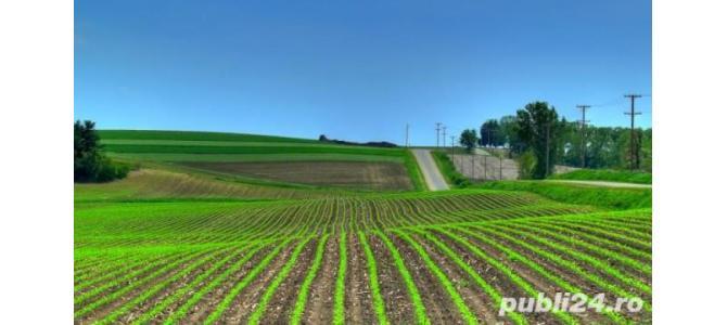 Dau in arenda teren agricol Suceava 550 hectare cu utilaje
