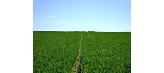 Dau in arenda teren agricol Botosani 50>100 hectare